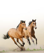 Paarden in stof — Stockfoto
