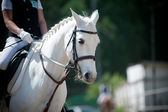 Rider and horse on dressage championship — Stock Photo