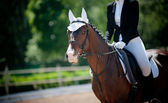 Horse and rider on dressage championship — Stock Photo