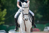 Dressage (small Dof) — Stock Photo