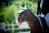 Horse on dressage championship — Stock Photo