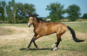Bahía caballo — Foto de Stock