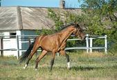 Entrenamiento del caballo — Foto de Stock