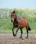 Horse wild — Foto de Stock