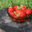 Strawberry harvest — Stock Photo #12099024