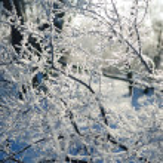 Frozen tree branch — Stock Photo #13725001