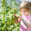 Adorable girl picking raspberries in a garden — Stock Photo #13725031