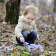 Little girl touching first flowers of spring — Stock Photo
