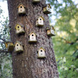 Bird homes - Stock Photo