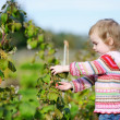 Adorable toddler girl picking raspberries — Stock Photo #13725269