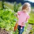 Adorable girl picking carrots in a garden — Stock Photo #13725405