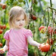 Adorable girl picking tomatoes in garden — Stock Photo #13725635