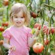 Adorable girl picking tomatoes in garden — Stock Photo #13726228