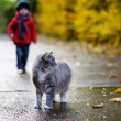 Royalty-Free Stock Photo: Gray cat and a child on autumn day