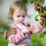 Adorable toddler girl picking raspberries — Stock Photo #13727614