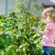 Adorable girl picking raspberries in a garden — Stock Photo #13728029