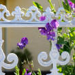 Sweet pea at a white fence - Stock Photo