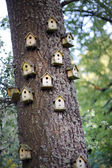 Bird homes — Stock Photo
