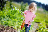 Adorable girl picking carrots in a garden — Stock Photo