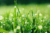 Fresh green grass with water drops on it — Stock Photo