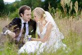 Bride and groom sitting in a meadow — Stok fotoğraf