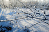 Frozen tree branch — Stock Photo
