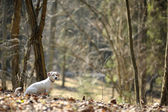 A dog in a spring forest — Stock fotografie