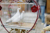 Two wedding doves as love symbol — Stock Photo