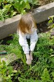 Roztomilá dívka výdeje mrkev v zahradě — Stock fotografie