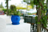 Greek courtyard with blue flower pot — Stock Photo