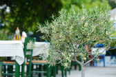 Blossoming olive tree in greek outdoor cafe — Stockfoto