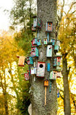 Lots of nesting boxes on a tree — Stock Photo