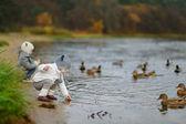 Feeding ducks at autumn — Stock Photo