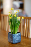 Beautiful spring narcissus flowers in pot — Stock Photo