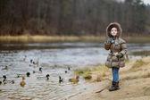 Little preschooler girl feeding ducks at autumn — Stock Photo