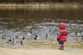 Little toddler girl feeding ducks at autumn — Stock Photo