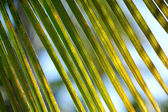 Close up of a palm tree — Stock Photo