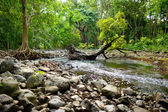 Tropical jungles of Mauritius island — Stok fotoğraf