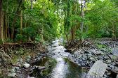 Tropical jungles of Mauritius island — Stock Photo