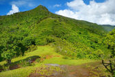 Tropical jungles of Mauritius island — Foto de Stock