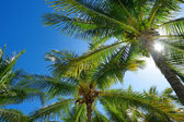 Palm trees  on a tropical island — Stock Photo