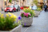 Flowers in town — Stockfoto