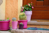 Cactuses in colorful pots — Stock Photo
