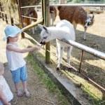 Two little sisters feeding llama — Stock Photo #51535755