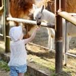 Two little sisters feeding llama — Stock Photo #51535759