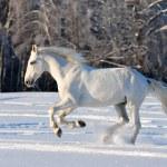 Free white horse on winter background — Stock Photo #38341351