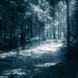 Path to light through a dark forest at night — Stock Photo