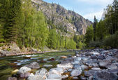 Altai river Kumir — Stock Photo