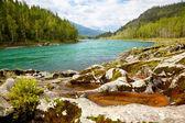 Altai river Katun — Stock Photo