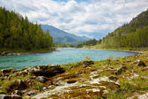 Altai river Katun — Stock Photo